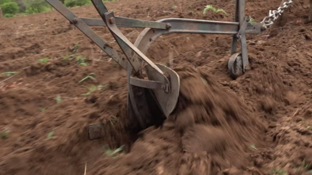 farmers ploughing dry land in drought hit zambia in an attempt to grow corn - plough stock videos & royalty-free footage
