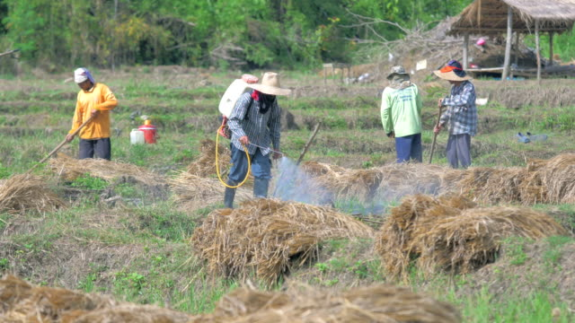 Farmers prepare the land for planting and spraying pesticides