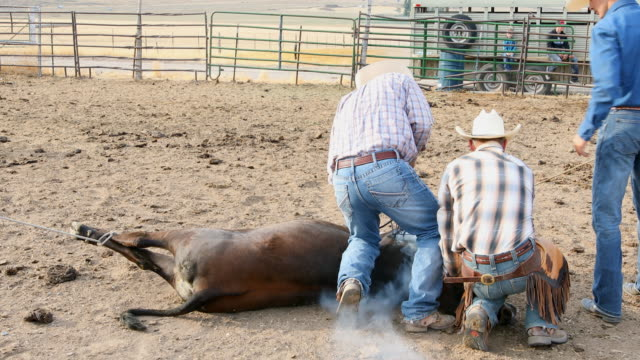 farmers roping cattle for branding - north america stock videos & royalty-free footage