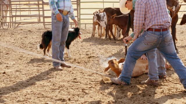 vídeos y material grabado en eventos de stock de agricultores roping ganados para calificar - oficio agrícola