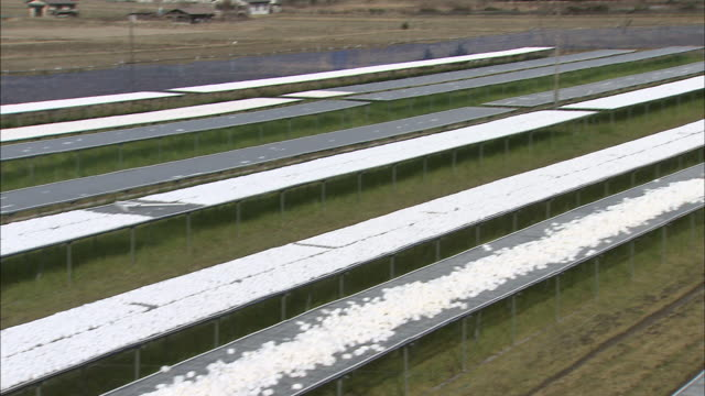 farmers sort and organize frozen konjac on wire racks. - root vegetable stock videos and b-roll footage