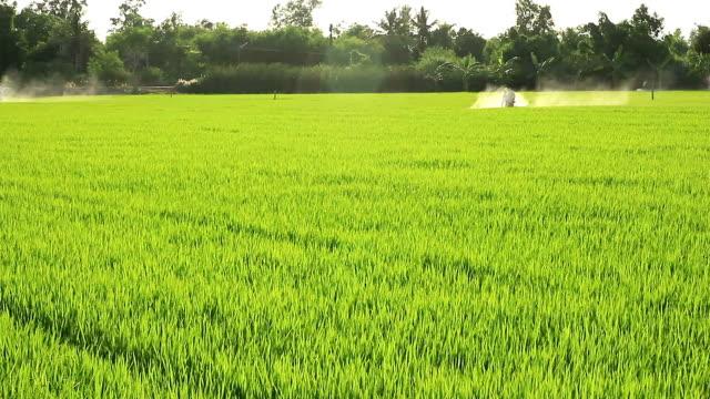 Landwirte sprühen Schädlingsbekämpfungsmittel auf Reis Felder