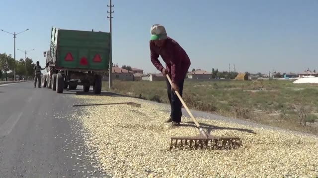 farmers spread pumpkin seeds on a road for drying in the central konya province of turkey on september 05 2018 interview with ahmet inal on wednesday... - konya stock videos and b-roll footage