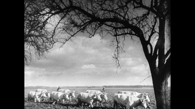 vídeos y material grabado en eventos de stock de farmers tilling field w/ oxen hillside village french peasant men talking in town by stone fencing farmers plowing land flat amp hillside - animales de trabajo