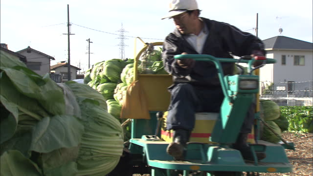 farmers unload bundles of hiroshima-na cabbages from a farm trailer. - 農業従事者点の映像素材/bロール