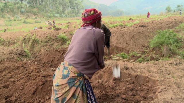 Farmers use hoes to till soil in Rwanda.
