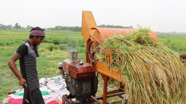 farmers using a threshing machine to process rice - threshing stock videos & royalty-free footage