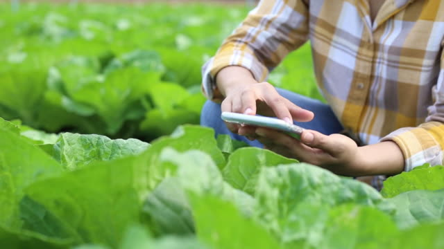 farmers using technology checking quality of organic vegetable - botany stock videos & royalty-free footage
