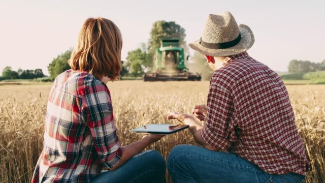 farmers with digital tablet examining wheat,watching combine harvester harvesting in background,slow motion - produttore video stock e b–roll