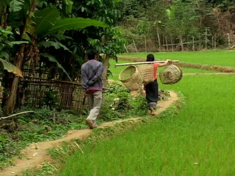 zo, ws, farmers with hoops walking along field, rear view, muang -noi, laos - fan palm tree stock videos & royalty-free footage
