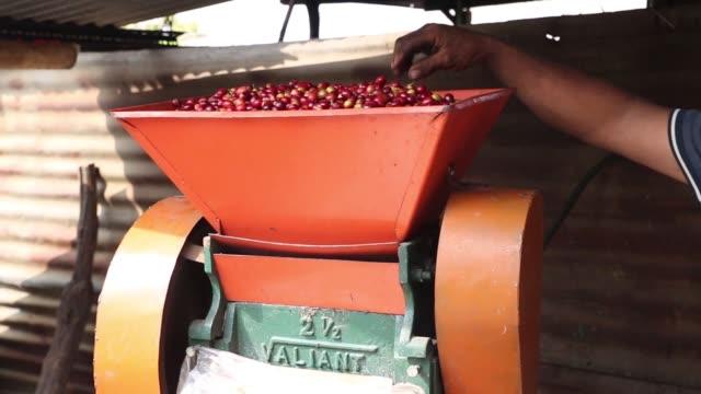 farmers work during coffee harvest on the slopes of the agua volcano near san miguel escobar, guatemala on dec. 17, 2015 photographer nadia sussman... - agua点の映像素材/bロール