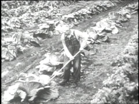 stockvideo's en b-roll-footage met farmers work in a vegetable field in alaska - alaska verenigde staten