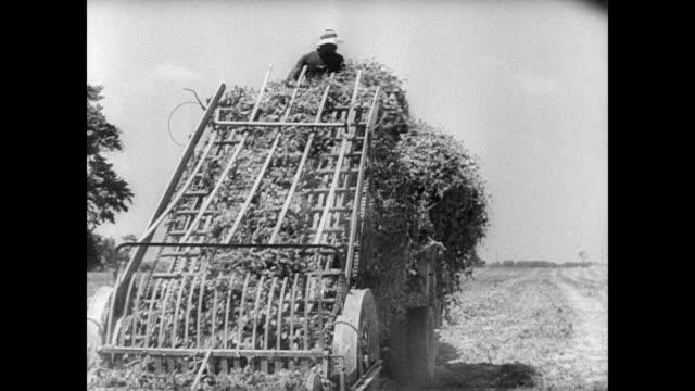 / farmers work small combine harvesters in field. farming in new jersey fields on january 01, 1946 in new jersey - combine harvester stock videos & royalty-free footage