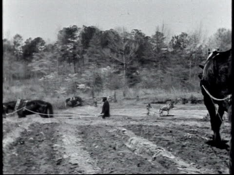 1940 ws farmers working field / alabama, united states - 1910 stock videos & royalty-free footage