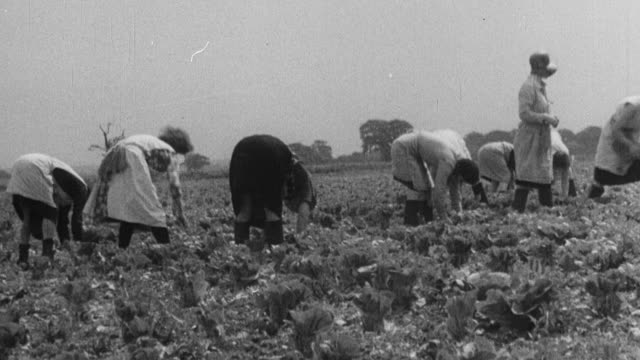 1933 montage farmers working in farm field / united kingdom - 1933 stock videos & royalty-free footage