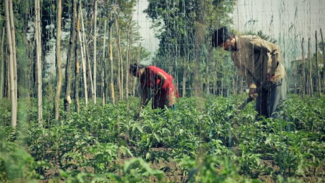 vídeos y material grabado en eventos de stock de agricultores que trabajan en la granja. - encuadre de tres cuartos