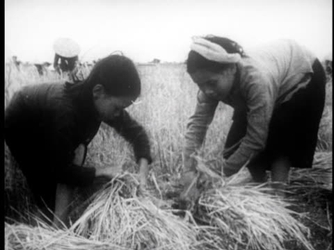 Farmers working in rice paddys / harvesting grain by hand and threshing / Ho Chi Minh visits the fields and is presented with a gift