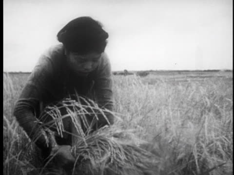 stockvideo's en b-roll-footage met farmers working in the fields harvesting grain / during a lunch break a woman gets up and sings for the workers - strohoed