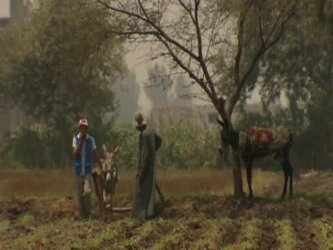 Farmers working on land with donkeys