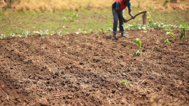 Farmers working on rural African farm