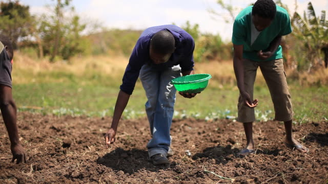 farmers working on rural african farm - agriculture stock videos & royalty-free footage