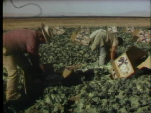 farmhands harvest the crops at a farm in the imperial valley of california. - インペリアルバレー点の映像素材/bロール