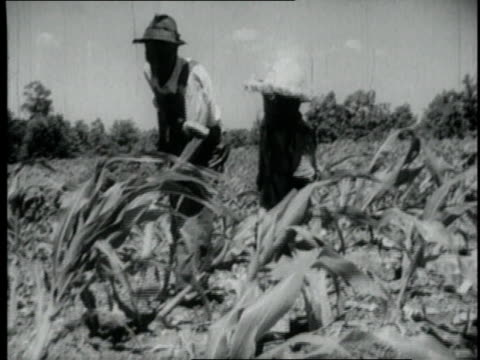 1940 WS Farmhands working in a field / United States