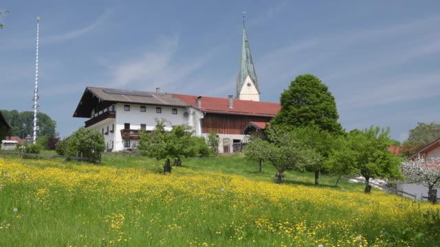 farmhouse and church on buttercup meadow - ranunkel stock-videos und b-roll-filmmaterial