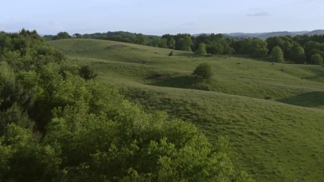 WS AERIAL POV Farmhouse and grain silos on farmland, cows grazing in background / Smyth County, Virginia, United States