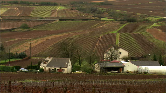 WS Farmhouses amongst vineyards / Burgundy, France