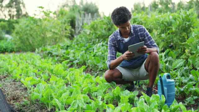 farming gone digital - environmental conservation stock videos & royalty-free footage