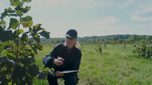 Farming Hazelnut
