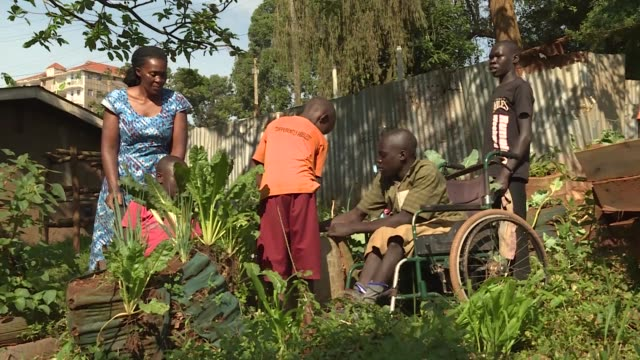 vidéos et rushes de farming in africa is perceived as an activity for the able bodied persons. but at the school for the physically handicapped children in a suburb of... - kampala