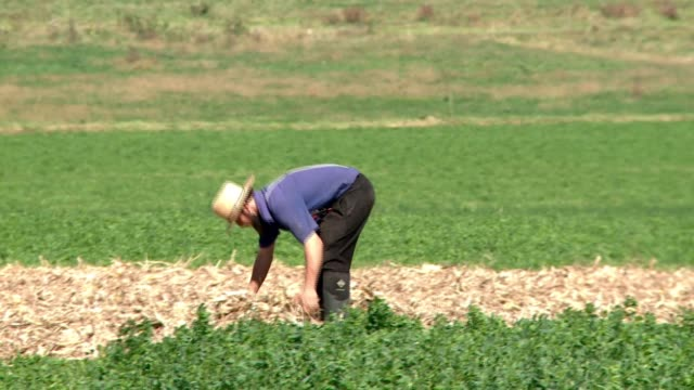 vidéos et rushes de farming in and around pennsylvania dutch country agriculture tourism classic images buggies barns - amish