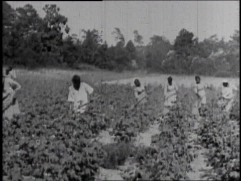 farming in field - 1921 stock videos & royalty-free footage