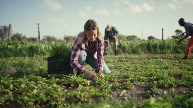 vídeos de stock e filmes b-roll de farming is life - colheita