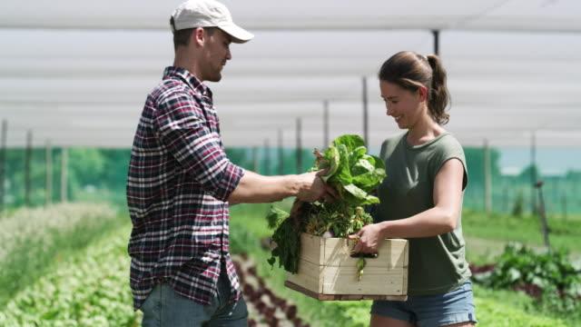 vídeos de stock, filmes e b-roll de a agricultura é uma segunda natureza para nós - boyfriend