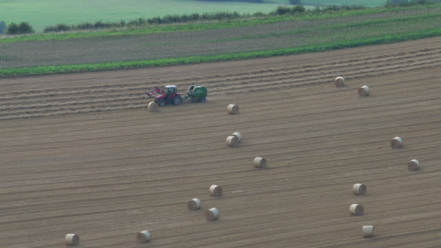 farming on the somerset levels - somerset levels stock videos and b-roll footage