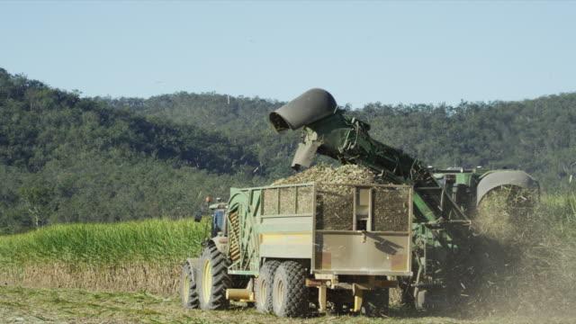 Farming sugarcane in Australia.