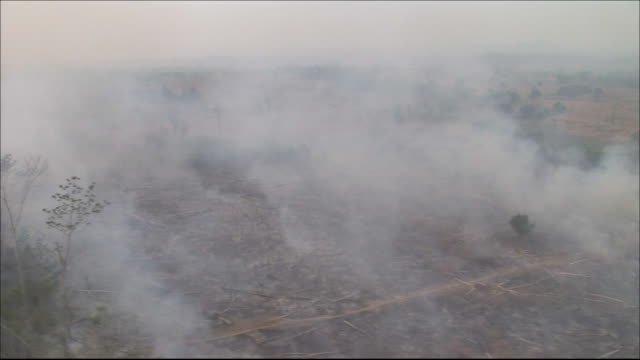 Farmland on cleared ground  Tracking Shot  Burning rainforest  Smoke rising  Wide Shot  Aerial Shot
