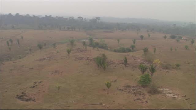 farmland on cleared rainforest  tracking shot - rind stock-videos und b-roll-filmmaterial