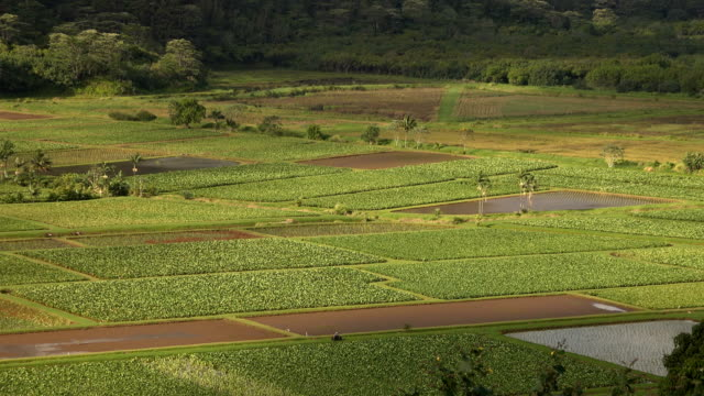 farmland on kauai island at base of mountains - butte rocky outcrop stock videos & royalty-free footage