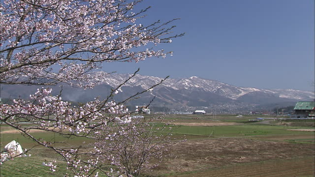 farmland separates a blossoming cherry tree and snow-capped mountains in iiyama, nagano. - nagano prefecture stock videos and b-roll footage