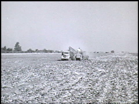 farmland trees ws field vs farmer w/ tractor pulling harvester machine harvesting sugar beet crop from ground conveyor dumping root vegetable into... - root vegetable stock videos and b-roll footage