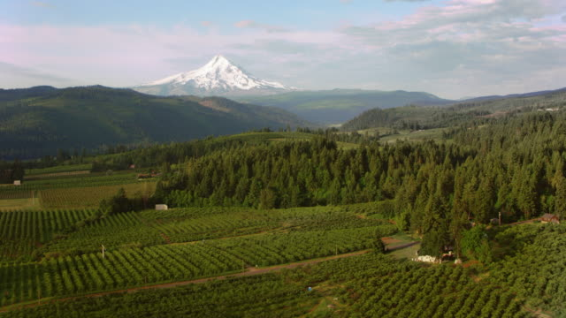 aerial farmland with beautiful view of the mt. hood - mt hood stock videos & royalty-free footage