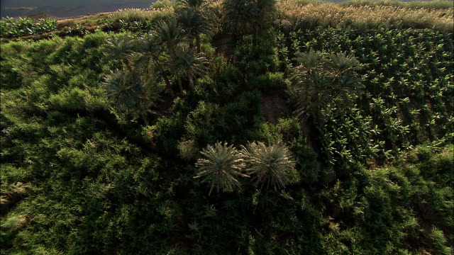 vidéos et rushes de farmlands fill the banks of the nile river. - verger