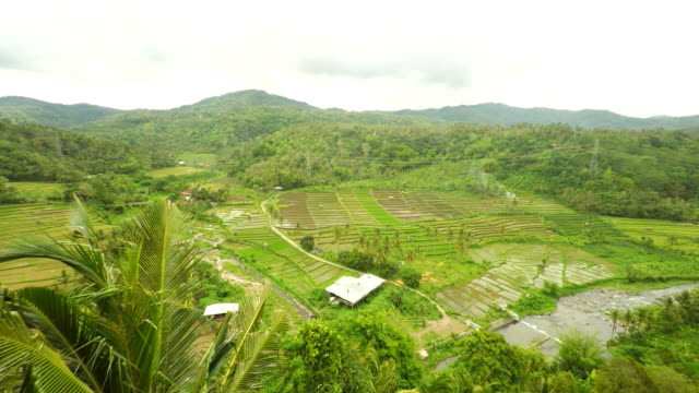 AERIAL Farms Along The River In Bali