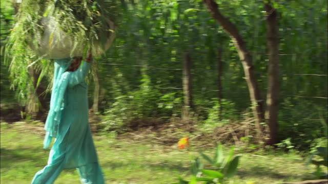 A farm-worker with a sack of greenery on her head walks through a wooded area. Available in HD.