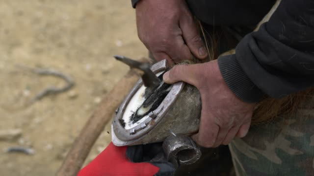 farrier attaches horseshoe to the hoof with nails - horseshoe stock videos and b-roll footage