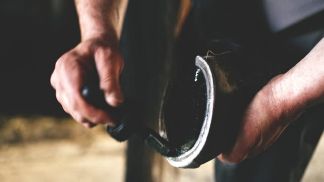cu farrier in a process of shoeing a horse's hoof - horseshoe stock videos and b-roll footage